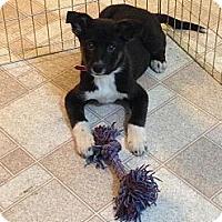 Adopt A Pet :: Boone - Saskatoon, SK