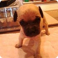 Adopt A Pet :: Gordie - Glendale, AZ