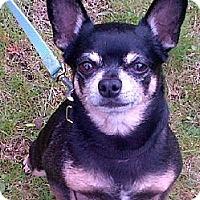 Adopt A Pet :: Rascal - Toronto, ON