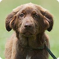 Adopt A Pet :: Kirwan - Providence, RI