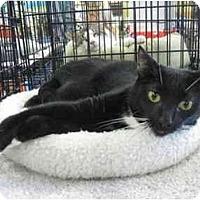 Adopt A Pet :: Logan - Easley, SC