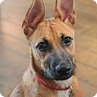 Adopt A Pet :: Ruby - Kingwood, TX