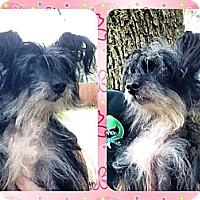 Adopt A Pet :: Gizmo - Gainesville, FL