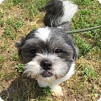 Adopt A Pet :: Gideon - Rockaway, NJ
