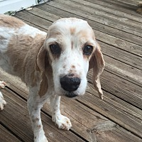Adopt A Pet :: Chloe 6yr - Mentor, OH