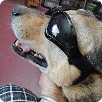 Adopt A Pet :: Charlie - Pomerene, AZ