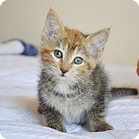 Adopt A Pet :: Olivia - Xenia, OH