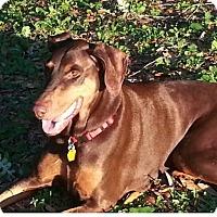 Adopt A Pet :: Boo - Orlando, FL