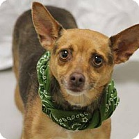 Adopt A Pet :: Beth - Lebanon, CT