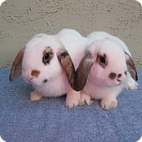Adopt A Pet :: Gilligan & Madigan - Bonita, CA