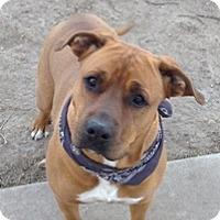 Adopt A Pet :: Zeus - Fort Benton, MT