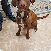 Adopt A Pet :: Lucy - Cody, WY