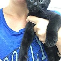 Adopt A Pet :: Anthony - Covington, KY
