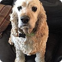 Adopt A Pet :: Colby - Sacramento, CA