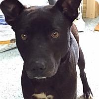 Adopt A Pet :: Guinness - Boston, MA