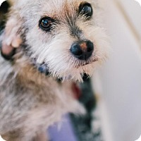 Adopt A Pet :: Carlisle - San Francisco, CA