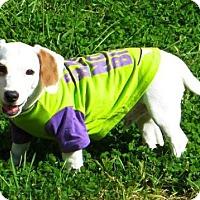 Adopt A Pet :: Locutus - Livonia, MI