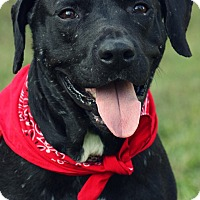 Adopt A Pet :: Champ - Conway, AR