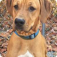 Adopt A Pet :: Ruby - Spring Valley, NY