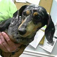 Adopt A Pet :: ALICE - Atlanta, GA