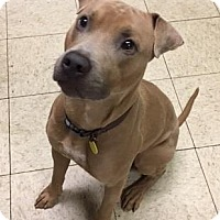 Adopt A Pet :: Frost - Cleveland, OH