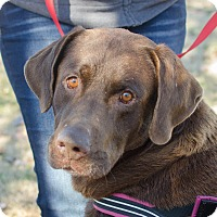 Adopt A Pet :: Neil - Greenwood, SC