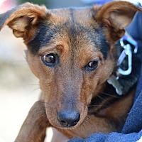 Adopt A Pet :: chloe - Acworth, GA