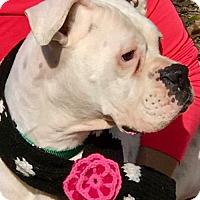 Adopt A Pet :: Peggy Sue - Wilmington, NC