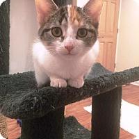 Adopt A Pet :: Smores - Edinburg, PA