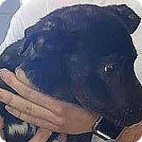 Adopt A Pet :: Pepper Ann - Boston, MA