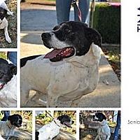 Adopt A Pet :: Tina - Cochran, GA