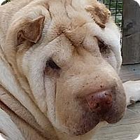 Adopt A Pet :: Ginger - Barnegat Light, NJ