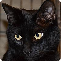Adopt A Pet :: Chumsi - Taftville, CT