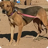Adopt A Pet :: Tally - Alamogordo, NM