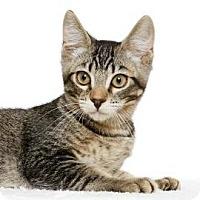 Adopt A Pet :: Dudley - Santa Monica, CA