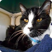 Adopt A Pet :: Augustus - Fort Collins, CO