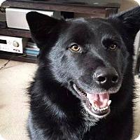 Adopt A Pet :: Merlin - Laingsburg, MI