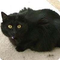 Adopt A Pet :: Cleopatra - Sacramento, CA