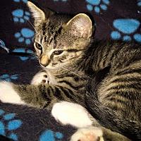 Adopt A Pet :: MAX - Burlington, NC