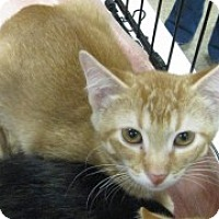 Adopt A Pet :: Manny - McHenry, IL