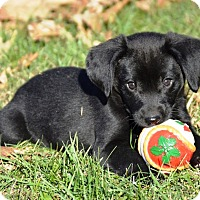 Adopt A Pet :: camote - Pleasant Plain, OH