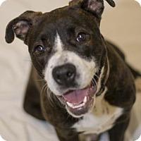 Adopt A Pet :: Marsha - Niagara Falls, NY