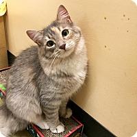 Adopt A Pet :: Periwinkle - McDonough, GA