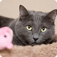 Adopt A Pet :: Blueberry - Fountain Hills, AZ