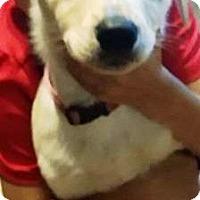 Adopt A Pet :: I'M ADOPTED Talia Kaperskis - Oswego, IL