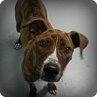Adopt A Pet :: Lulu - Muskegon, MI