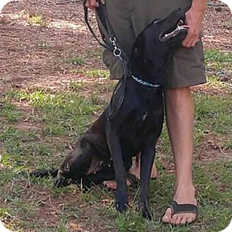 Labrador Retriever Mix Dog for adoption in McCormick, South Carolina - AA Skye