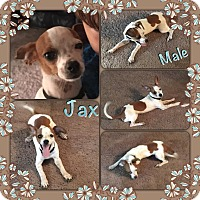 Adopt A Pet :: Jax in CT - Manchester, CT