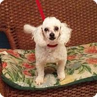 Adopt A Pet :: Sophie - Tulsa, OK