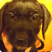 Adopt A Pet :: Ripley - Medora, IN